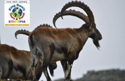 Ethiopia Simien Mountain Trekking 9 Days